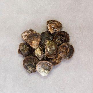platte oesters 01 vergroot